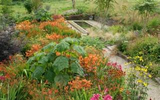 June Blake's Garden_0005